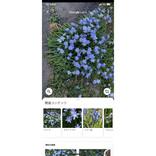 知らない動植物の名前をiPhoneで調べることはできますか? - いまさら聞けないiPhoneのなぜ