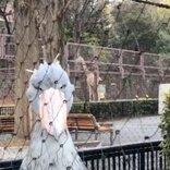 上野動物園のハシビロコウがたたずむ姿に「まるで静止画のような動画」の声