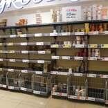 都内スーパーからカップ麺も品薄状態 あっという間に売り切れた人気商品は…