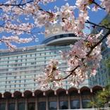 優雅に桜を楽しむなら「ホテル花見」はいかが?こだわりの桜メニューも