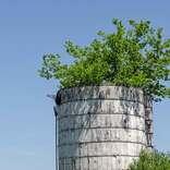 閉塞感をぶち破る? 大空へ伸びる大木の住みかは…