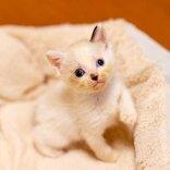 キャットシッターに聞いた!子猫を保護した際の正しい対処法
