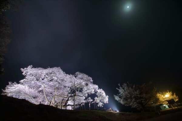 三隅大平桜(みすみおおびらざくら)