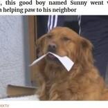 """自主隔離の高齢女性のために飼い主と協力し食料品を届ける犬""""サニー""""(米)<動画あり>"""