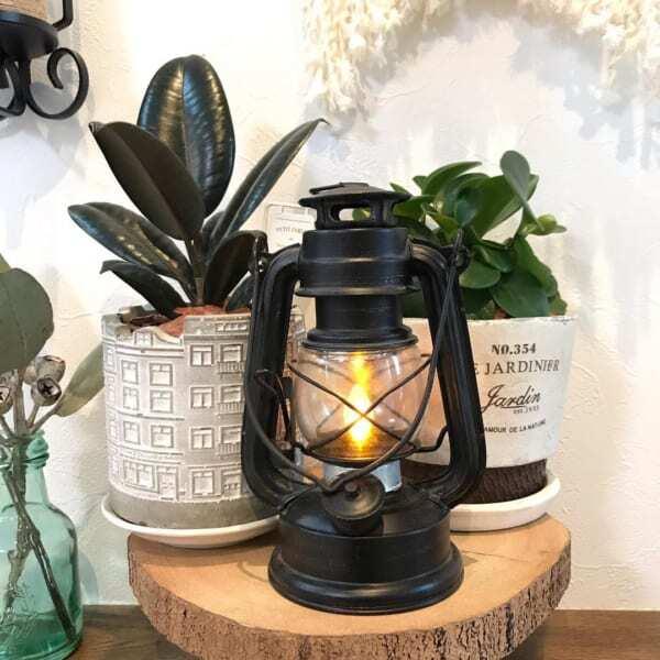 素敵な鉢に植え替えたダイソーの観葉植物