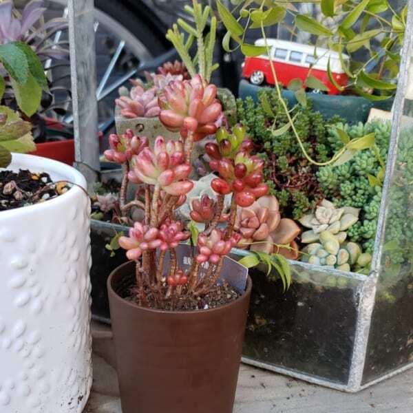 種類豊富な多肉植物