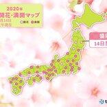 盛岡で桜開花 平年より一週間早く