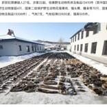 中国で密猟者ら27人を逮捕 野生動物の死骸13000体超を警察が押収