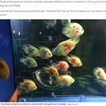 中国の水族館、魚に人名を書いて「あなたの名字が見つかるかな?」SNS大炎上