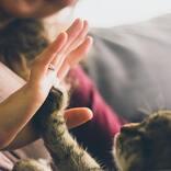 「泣きたい私は猫をかぶる」の本予告公開!主題歌担当は「ヨルシカ」