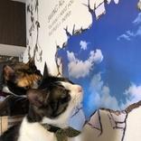 """怒られちゃうかニャ… 壁に爪を立てた猫たち、ドッキリで出現したリアルな""""壁の穴""""に釘付け"""