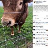 電柱でお尻を掻いた牛 800戸以上の停電を起こす(スコットランド)