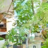 お部屋を彩るインテリアグリーン!植物のある暮らしで毎日に潤いを