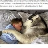 「一緒に寝たい!」2歳児に添い寝する飼い犬が超キュート(英)<動画あり>