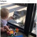 アライグマの突然の訪問に大興奮する赤ちゃん 「『インクレディブル・ファミリー』を思い出す」