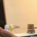 ちゃんと洗えてるかニャ? 猫監視員さん、可愛すぎる見守りで皿洗いを楽しくしてくれる