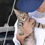 【冬だけじゃない】車に乗る前に「猫バンバン」してますか?