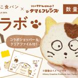 黄色い耳にブチ模様も再現!ネコ型パンにタマの顔を描いて楽しめる『ねこねこ食パン』×『うちタマ』コラボ
