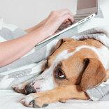 長期間のテレワークで飼ってる犬が… 上司も悩んでしまった相談とは