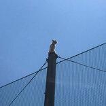 近畿大学「事件が起こりました」 猫の救出劇を43万人が見守る