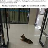 """中国の""""忠犬ハチ公"""" 亡き飼い主を病院内で3か月も待ち続ける"""