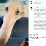 世界一の長さ? 30cm超の鼻を持つ2歳のボルゾイ犬(米)
