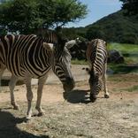 【2020年6月2日更新】全国の動物園の再開情報