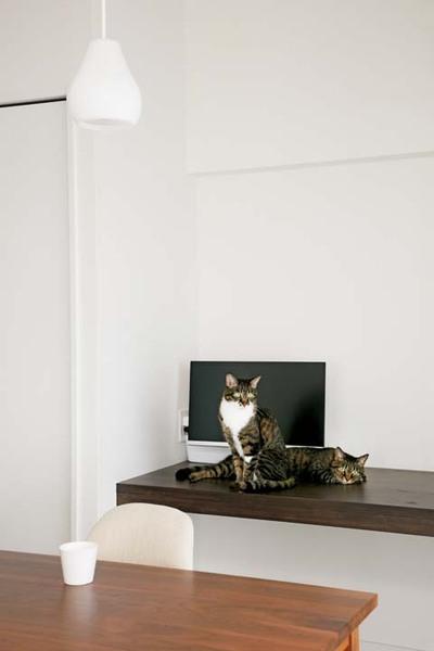 猫たちの食事スペース
