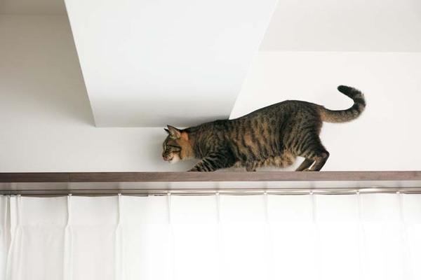 カーテン上の木枠の幅を伸ばして設置したキャットウォーク
