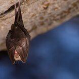 空から200匹のコウモリが落下 「新型コロナか」と住民が戦々恐々