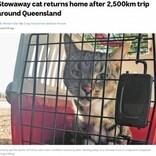 引っ越しトラックに乗り込んでしまった猫、2500kmを移動し無事飼い主の元に戻る(豪)<動画あり>