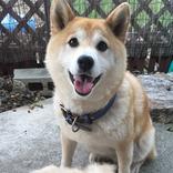 嬉しそうな表情の柴犬の前に置かれた『あるもの』に、衝撃…!