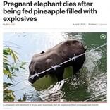 妊娠中の象、爆薬の詰まったパイナップルを食べて死亡(印)<動画あり>