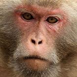 サルの意思決定を超音波でコントロールする研究