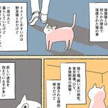 初めはペットショップに猫を探しに行った女性 しかし、虐待を受けていた保護猫に出会い…?
