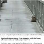 飼い主が飛び降り自殺した瞬間を目にした犬、橋の上で帰りを待ち続ける(中国)