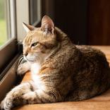 飼い主を見た猫が威嚇…!? その理由に、11万人が吹き出す