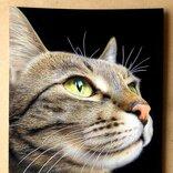 この猫ちゃん写真じゃないの!? 19歳が色鉛筆で描く動物画がすごい