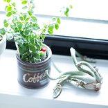 トイレにおすすめの観葉植物まとめ!育てやすい人気のグリーンをご紹介♪