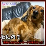 方言がヤバすぎる「自粛犬」動画が「面白過ぎる」「九州の血が騒ぐ」と話題 - 難解な九州弁を訳してみた