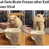 アイスクリームを食べたネコが気絶寸前に「キーン」と頭痛か(カナダ)<動画あり>