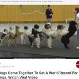 """12歳少女による犬8頭の""""コンガライン"""" 世界記録を達成した動画が拡散中(独)<動画あり>"""