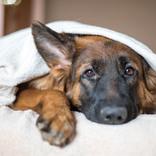 分離不安症を抱える犬 飼い主が家にいない時にしていたことがいじらしい