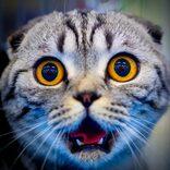 新たな嫌がらせ『猫ハラスメント』が話題!「自分はされたい」の声も