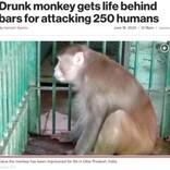 """250人を襲ったアルコール依存症の猿、一生""""独房""""で過ごすことに(印)"""