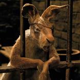 諏訪部順一演じるウサギが、藤原啓治演じるドリトル先生を挑発!?『ドクター・ドリトル』