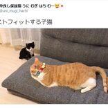 """遊びに夢中で""""ジャストフィット""""してしまう子猫の動画に17万いいね 「これは反則」「癒やされました」"""