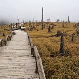 絶景と秘湯に出会う山旅(9)幻想的な大台ヶ原と山あいの料理旅館・朝日館