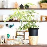 緑で部屋をおしゃれに彩る♪観葉植物を取り入れたインテリアの実例をご紹介!