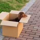 飼っていたペットを箱に入れて別れを告げる親子 しかし、その行動は…